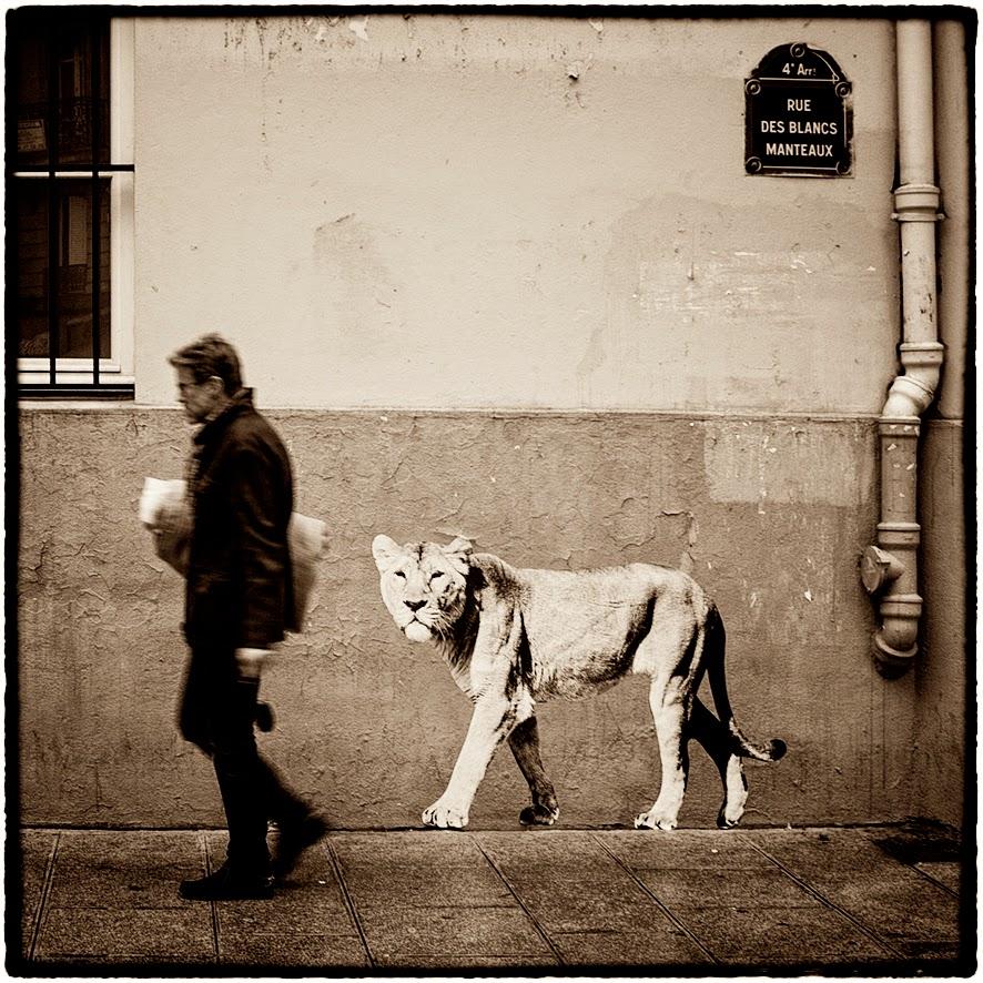 La Lionne rue des Blancs Manteaux sophie photographe L