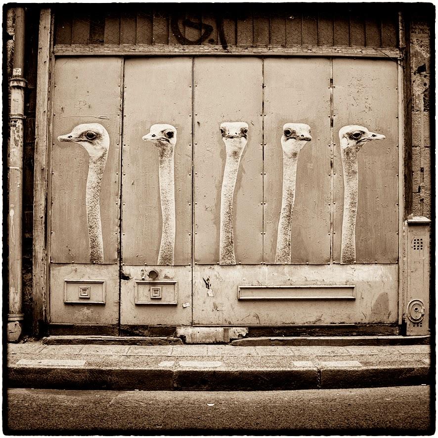 Les Autruches rue Geoffroy l Angevin sophie photographe
